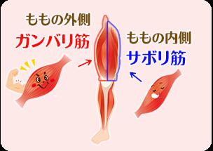 腿のサボリ筋とガンバリ筋のイラスト